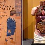 Fons dels Museus: Cigarrillos Paris i Tors anatòmic