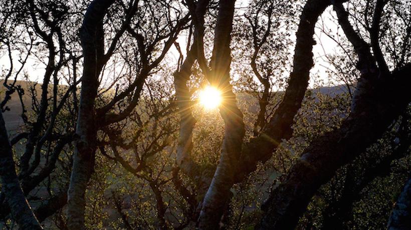 Dawn Chorus Day a la Garrotxa (Dia del cor dels ocells de l'alba)