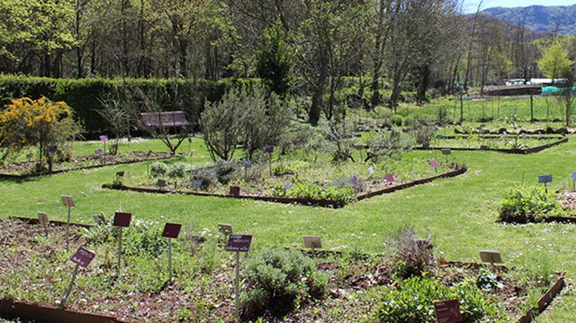 Visita guiada al jardí de plantes remeieres