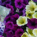 Regalem flors dedicades al quadre 'Les bugaderes', dels germans Vayreda