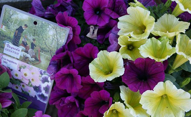 Regalem flors inspirades en el quadre Les bugaderes, dels germans Vayreda.