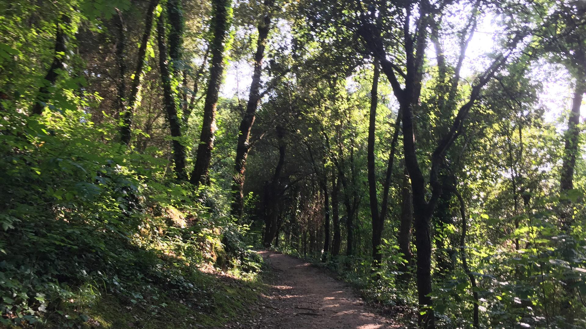 Què ens diuen els briòfits sobre l'estat ecològic dels boscos?