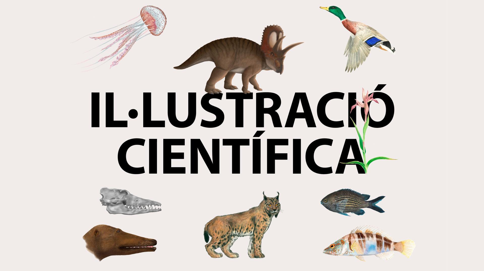 """Inauguració de l'exposició """"Il·lustració científica"""""""