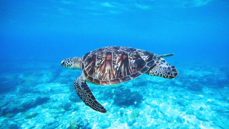 Com afecten els microplàstics a la fauna marina?