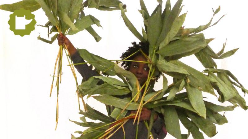 Taller de fibres vegetals